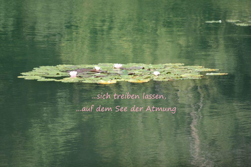 Wie die Insel der Seerosen auf dem Teich ist es möglich im Alltagsstress mit der Atmung eine insel der Entspannung zu schaffen